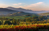 New morning in Val d'Orcia