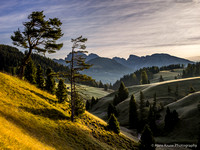 The crooked tree in Alpe di Siusi